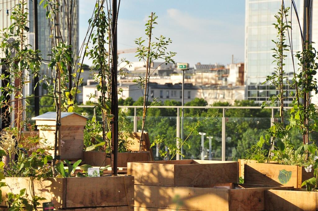 L'agriculture urbaine, tendance éphémère ou réel moyen de production pour les villes ?