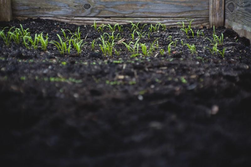 Les sols urbains refont surface